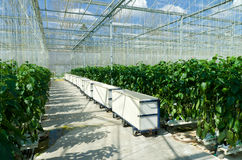 Commercial greenhouse Royalty Free Stock Photography