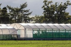 Commercial greenhouse polytunnel buildings with sunlight refecti Royalty Free Stock Image