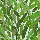 Seamless pattern with banana green leaves,  Stock Images