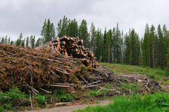 Commercial Logging Royalty Free Stock Image