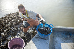 Commercial oyster fisherman Royalty Free Stock Photos