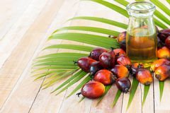 Commercial palm oil cultivation. Since palm oil contains more sa Royalty Free Stock Photo