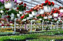 Commercial plant nursery Stock Photos