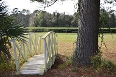 Footbridge at the Charleston Tea Plantation. The only commercial tea plantation in North America. The growing conditions are just right for the tea bush to stock photography