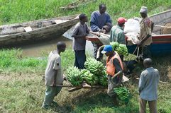 Commercial traffic of plantain along the lake Kivu royalty free stock image