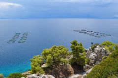 The fish farms in Greece. The commercially fish farms in fish ponds Royalty Free Stock Image