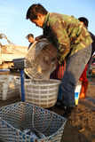 Commerciante di pesca Fotografia Stock Libera da Diritti