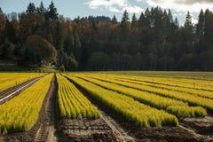 Commercieel boomlandbouwbedrijf Stock Foto