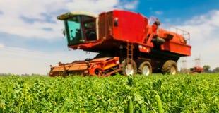 Commercieel Pea Farming Close omhoog van een peul van erwten stock foto's