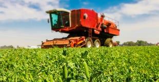 Commercieel Pea Farming Close omhoog van een peul van erwten royalty-vrije stock afbeelding