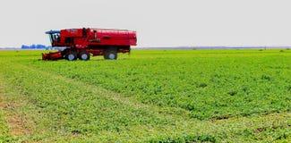 Commercieel Pea Farming met een Combine Maaidorser stock afbeelding