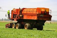 Commercieel Pea Farming met een Combine Maaidorser royalty-vrije stock fotografie