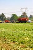 Commercieel Pea Farming met een Combine Maaidorser royalty-vrije stock afbeelding