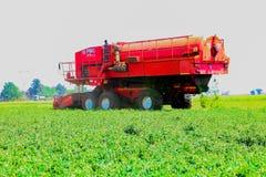 Commercieel Pea Farming met een Combine Maaidorser stock afbeeldingen