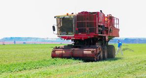 Commercieel Pea Farming met een Combine Maaidorser royalty-vrije stock foto
