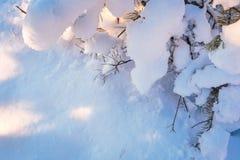 _commercieel vergunning u ` aangaande echt speciaal, de en slechts Congrats voor takken van een de unieke titelpijnboom, onder sn Royalty-vrije Stock Fotografie