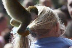 Commercio di scimmia Fotografia Stock Libera da Diritti