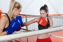 Committed skillful boxers training in a ring Stock Images
