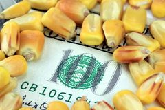 Commodity Trading Concept - US Currency One Hundred Dollar Bill with Yellow Corn. Commodity Market - Futures and Options Trading Concept Royalty Free Stock Photo