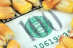 Commodity Trading Concept - US Currency One Hundred Dollar Bill with Yellow Corn Royalty Free Stock Photo
