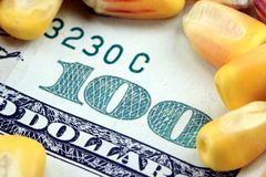 Commodity Trading Concept - US Currency One Hundred Dollar Bill with Yellow Corn Stock Photo