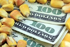 Commodity Trading Concept - US Currency One Hundred Dollar Bill with Yellow Corn Royalty Free Stock Images