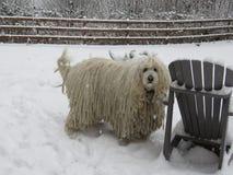 Commodor avelhund = Komondor i snö December 25, 2017 royaltyfri foto