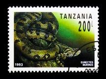 Common Anaconda Eunectes murinus, Reptiles of Tanzania serie, circa 1993. MOSCOW, RUSSIA - JANUARY 2, 2018: A stamp printed in Tanzania shows Common Anaconda Stock Photos