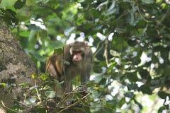Common asian monkeys Stock Photo