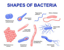 Common bacteria infecting human Stock Photo