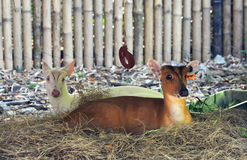 Common barking deer Royalty Free Stock Images