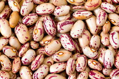 Common beans Royalty Free Stock Photo