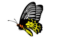 Common birdwing butterfly on white background Royalty Free Stock Photos