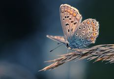 Beautiful butterfly warming on a grass Stock Photo