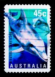 Common Bottlenose Dolphin Tursiops truncatus, Ocean Year serie, circa 1998. MOSCOW, RUSSIA - OCTOBER 3, 2017: A stamp printed in Australia shows Common Royalty Free Stock Photos
