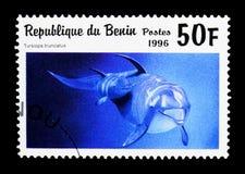 Common Bottlenose Dolphin (Tursiops truncatus), Sea Mammals seri. MOSCOW, RUSSIA - MARCH 18, 2018: A stamp printed in Benin shows Common Bottlenose Dolphin ( Stock Photo