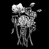 Common british opium poppies Royalty Free Stock Photography