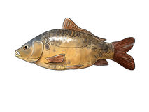 Common carp. Digital illustration of a common carp stock illustration