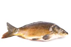 Common Carp fish Isolated on White Background Stock Photography