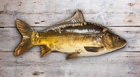 Common carp Stock Photos