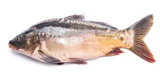 Common carp -food fish. Stock Photo