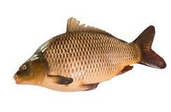 Common Carp isolated on white background Stock Photo