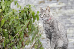 Common cat Stock Images