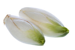 Common chicory flower buds Stock Image