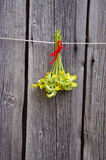Common Cowslip( Primula veris) medical flowers bunch hang  on wooden wall Stock Image