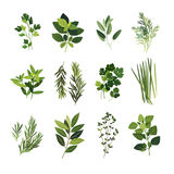 Common culinary herbs clip art Royalty Free Stock Photo