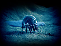 A common dust mite royalty free illustration