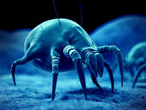 A common dust mite vector illustration