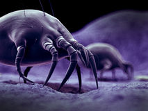 A common dust mite. Scientific illustration of a common dust mite royalty free illustration