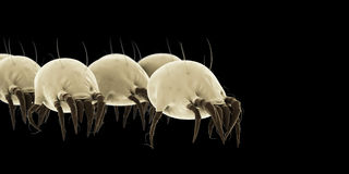 Common dust mites Stock Images